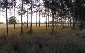 Trees Pasture Crops