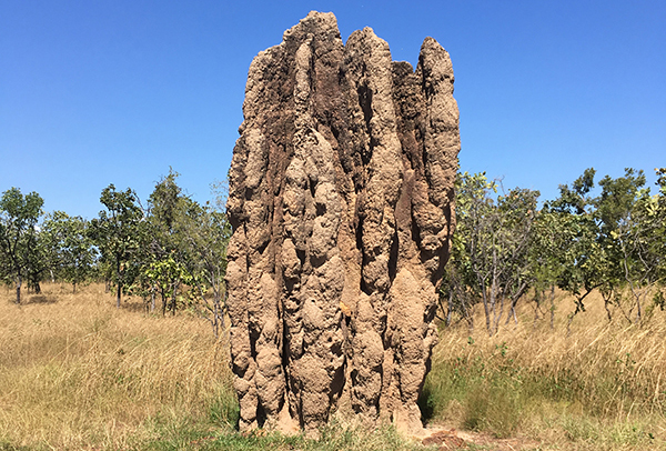 Termite mound, Northern Territory