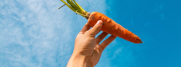 Carrot held by hand to the sky