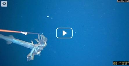 Screen grab of video.