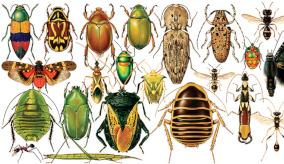 Illustration of bugs