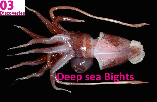 image of squid