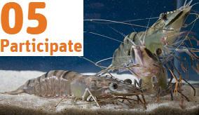 Image of prawns