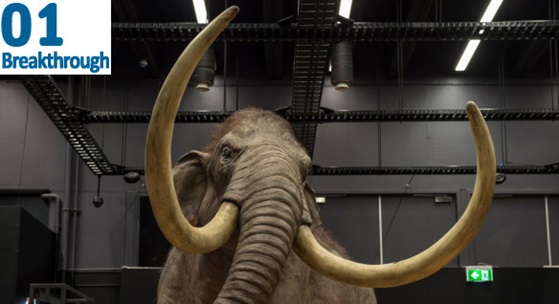 woolly mammoth exhibit at museum