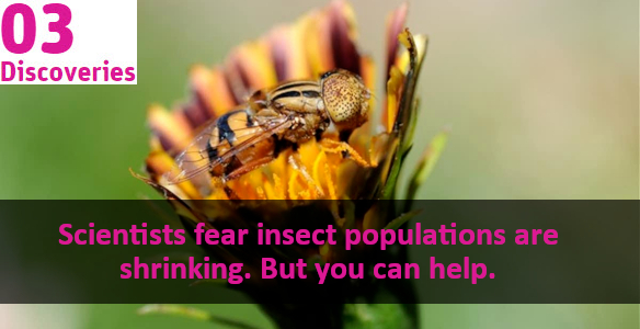 orange and black insect on a flower and the words scientits fear insect populations are shrinking but you can help