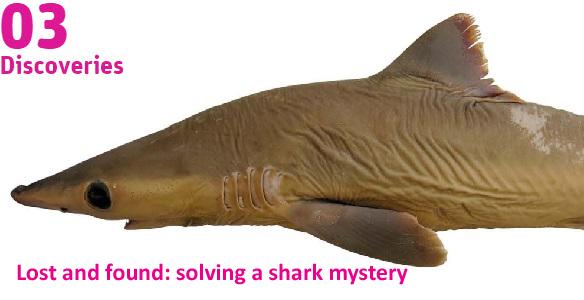 image of shark