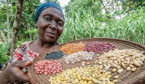 A Ugandan farmer shows 15 varieties of bean seeds