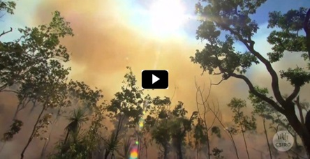a forest on fire with lots of smoke