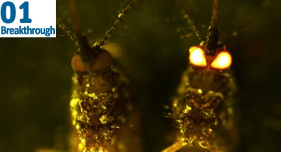 close-up of two mosquitoes, with one's eyes glowing red in the dark