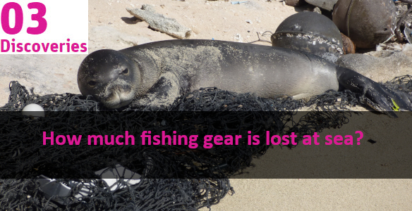 seal lying on the beach with some fishing nets