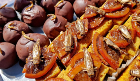 chocolates and sweets with edible insects on top